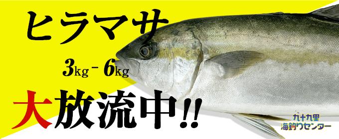 ヒラマサ大放流!!