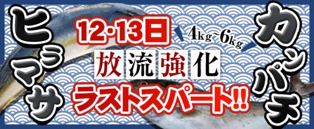 青物放流強化12・13日ラストスパート!!